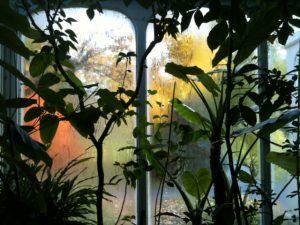 Pamela Bartlett Alexander Technique - greenhouse window