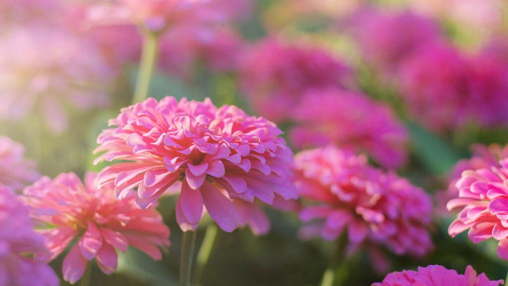 pam Bartlett Alexander Technique Flowers in sunlight