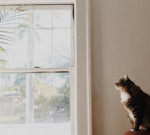 Pamela Bartlett Alexander Technique - cat waiting to pounce