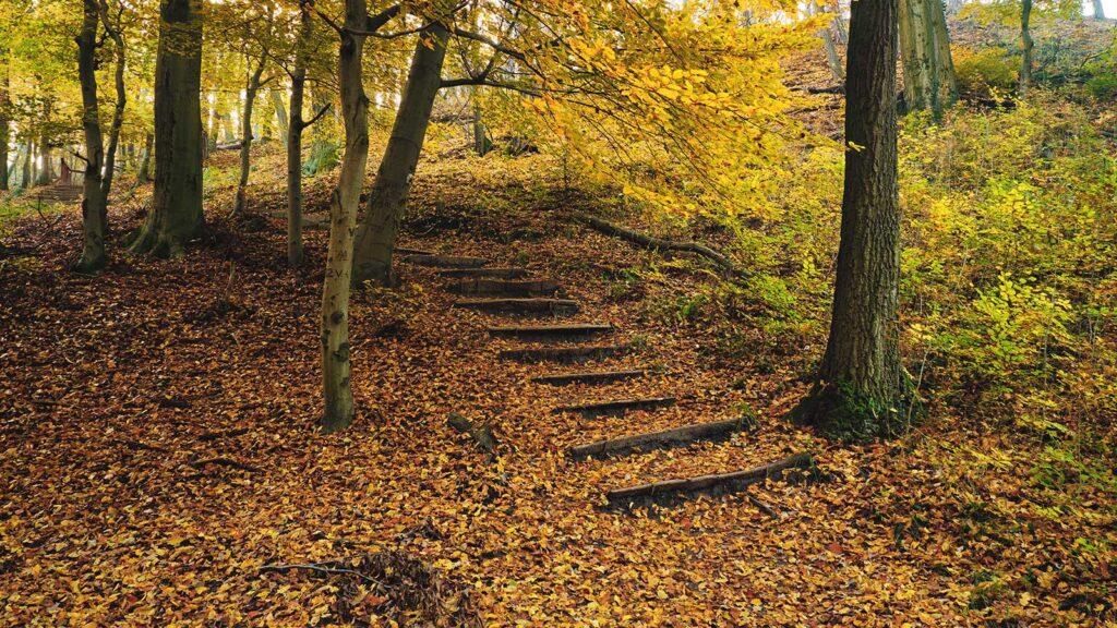 pamela Bartlett Alexander technique - Path in the woods