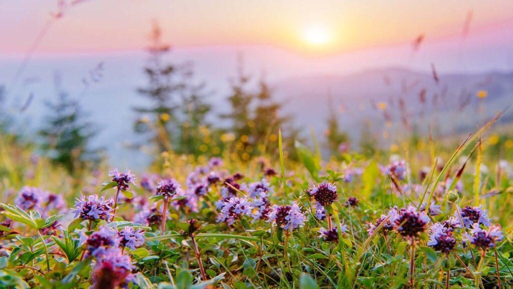 Pamela Bartlett Alexander Technique - Flowers in a field